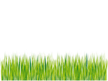 Grass Silhouette Green, Summer Royalty Free Stock Image