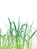 Grass silhouette green, summer Royalty Free Stock Photography