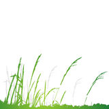 Grass silhouette green, summer Royalty Free Stock Photo