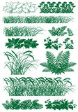 Grass. Silhouette image of different types of herbs on a white background Royalty Free Stock Photos