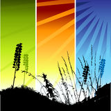 Grass silhouette on meadow Royalty Free Stock Photos