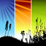 Grass silhouette on meadow Royalty Free Stock Images