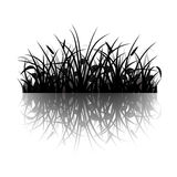 Grass silhouette Stock Image