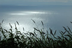 Grass silhouette over the ocean Stock Photography