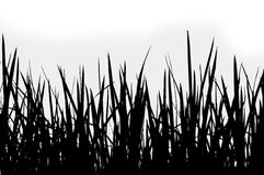 Grass silhouette on a white background Royalty Free Stock Photo