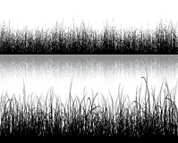Grass silhouette  on white Royalty Free Stock Image