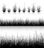 Grass silhouette  on white Royalty Free Stock Images