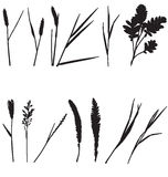 Grass silhouettes Stock Photography