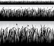 Grass silhouettes vector Stock Images