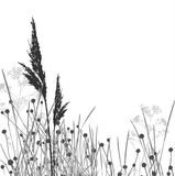 Grass silhouettes / vector / separated Stock Photography