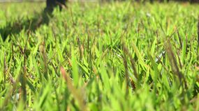 Grass. Simple grass photo with focus royalty free stock photo