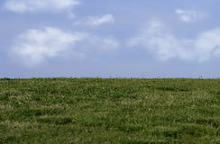 Grass and sky. Green grass and blue sky with clouds royalty free stock photo