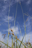 Grass and Sky. Show the beautiful of nature. Can be use as background in Design Royalty Free Stock Photos