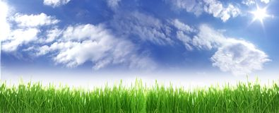 Grass and sky. Stock Image