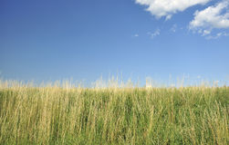 Grass and sky. Grass and blue sky with a few of clouds Royalty Free Stock Image