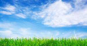 Grass and sky Royalty Free Stock Images