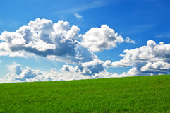 Grass and sky. Background of grass and sky Royalty Free Stock Photo