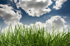 Grass and sky. Green grass with the clouds and blue sky in the background Royalty Free Stock Images