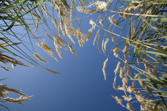 Grass and the sky Stock Photography