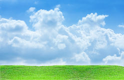 Grass and sky. Green grass and blue sky Stock Photo