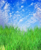 Grass and sky. Beautiful green grass and sky Stock Photo