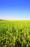 Grass and sky #2 Royalty Free Stock Photography