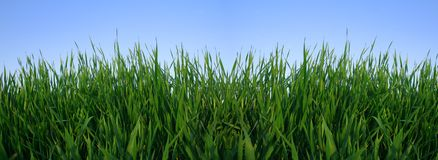 Grass and sky. Green grass and blue sky in spring Royalty Free Stock Images