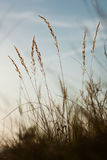 Grass on the sky royalty free stock photography
