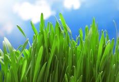 Grass on sky Stock Photography