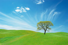 Grass and sky Royalty Free Stock Photography
