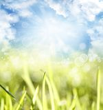 Grass and sky. Spring background Royalty Free Stock Photography