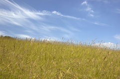 Grass and sky. Uncut grass and blue sky Stock Photo