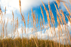 Grass and sky. Stock Photography