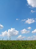 Grass & sky Royalty Free Stock Photography