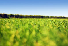 Grass and sky. Summer grass and sky #1 Royalty Free Stock Photography