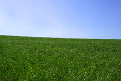 Grass and sky. On a spring day Royalty Free Stock Photo