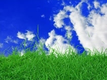 Grass Sky Royalty Free Stock Photography