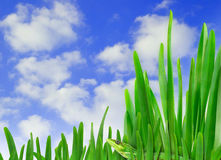 Grass and sky Stock Photos