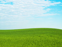 Grass sky. Background of cloudy sky and grass Stock Photos
