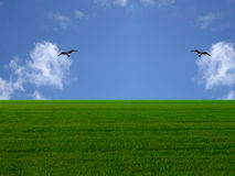 Grass and Sky. The grass and the sky with 2 birds stock images