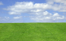 Grass and sky. Background Royalty Free Stock Photography