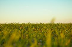 Grass and sky. Blue, clear sky and grass royalty free stock image