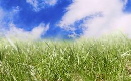 Grass sky. Green grass under blue sky with fleecy clouds Stock Photography