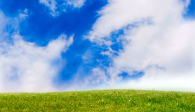 Grass and sky. Summer grass and cloud sky Royalty Free Stock Photography