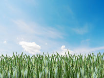 Grass sky Royalty Free Stock Image