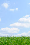 Grass and Sky Background. Green and blue Royalty Free Stock Images