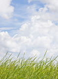Grass and sky background Stock Photography
