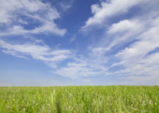 Grass and Sky Background. Green grass and summer sky background Stock Photos