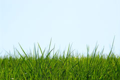 Grass sky background Royalty Free Stock Images