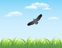 Grass and Sky Background. Vector illustration Stock Photos